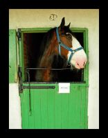 horse by damo3sp