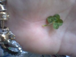 4 leaf Clover by Gotitlikethat