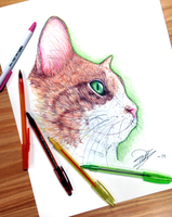 Quick Cat sketch by Tariqfisher