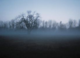 Large Tree In  Distance by bp-girl-stock