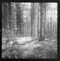 black forest in black and white - 4 by VooDooMania