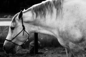 Soft Focus Horse by PhillyPuddy