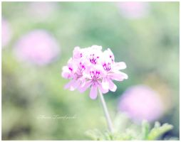 flower 8 by s-masha