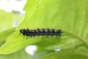 Close Up Caterpillar 2 by rodericklal