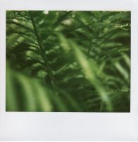 Where Ferns Grow I by Artificient