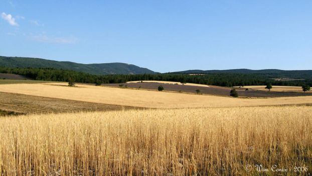 Fields of gold... by Wimley