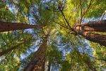 Muir Woods Foliage - Exclusive HDR Stock by somadjinn