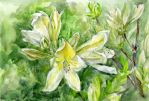 Lilies-finished-flower-study-08 by Joinerra