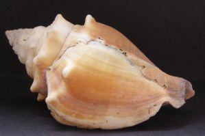 Shell...... by chop-stock