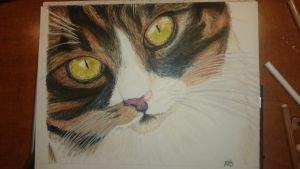 Cat drawing by Riissie