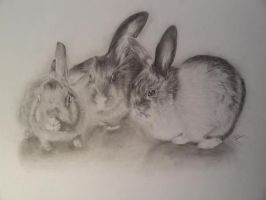 bunnies from my bestfriend :D by Tischotchi