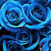 Anniversary Roses In Blue by LDFranklin