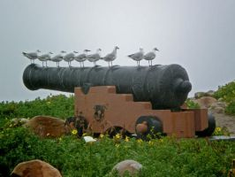 Seagulls sitting on a canon by Jenvanw
