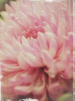 Rhapsody in Pink by PixiePoxPhotography