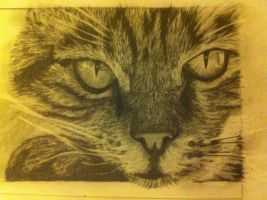 Cat by MaUsY