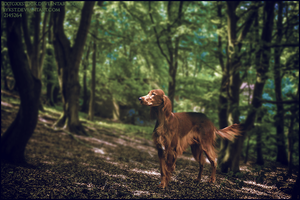 Hunting Dog by xxtgxxstock