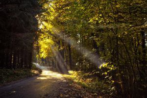 rays of the sun 3 by Mark-Heather