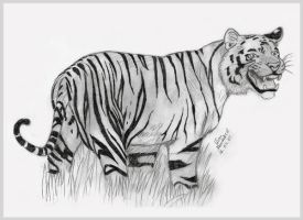 Tiger 4 by Lion-Neverkilled