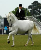 tack removed andalusian by kodalover