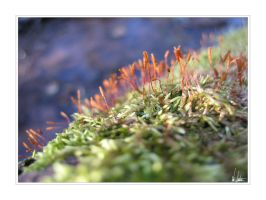 Spores II by NEME5IS