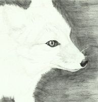 Arctic fox by Sollerion