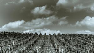 Wind on Wine by OlivierAccart