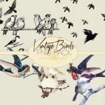 Vintage Birds Png Pack #2 by weownedthenight