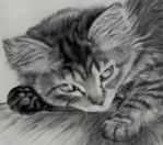 Sleepy kitten by abmama
