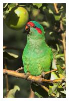 Parrot CRW_5297-01 by Dyer-Consequences