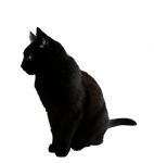 black cat png by camelfobia