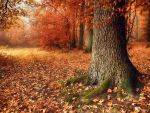 misty autumn VI by Weissglut