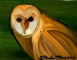 Barn Owl by youlittlemonkey
