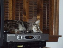 Another Use for a DVR by AngelRaye