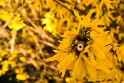yellow flowers by knolldo