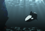 Orca 01 by Clairey-kun