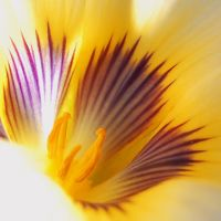 yellow and magenta by mikebass