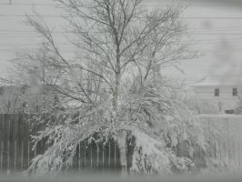 Snow Tree by ThroughTheEyePiece