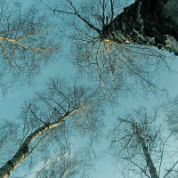 Look up 2 by wojtar