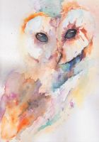 Owl Watercolor by LisaSensless