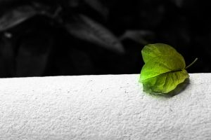 Leaf Isolation by mrmevs