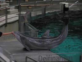 Animals 116 dolphin by Dreamcatcher-stock