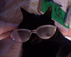 Glasses by Woolfred