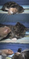 cat and hamster friendship by CAVAFERDI