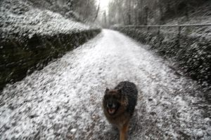 Chienne I love Snow by Martin-Lyne