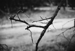 Branch- B and W by Chris01125