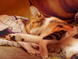 Cats and Curtains 06 by ariellemika12