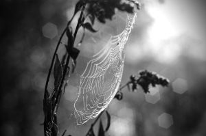 ..morning.web by thedzo
