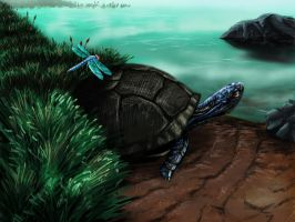 Turtle Pond by Axxonu