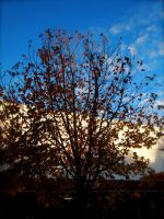 Tree Outside the Mart by jacobjellyroll