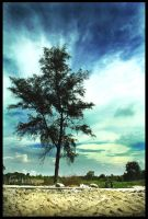 One Tree Hill by poetry2capullet